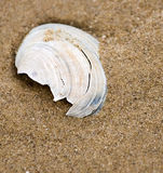 Broken Sea Shell in Sand Royalty Free Stock Image