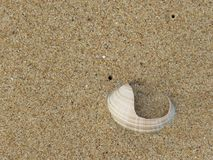 Broken sea shell in the sand. Broken sea shell sticking out of beach sand Royalty Free Stock Photos