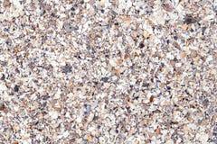 Broken sea shells background Stock Image
