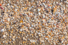 The broken sea shells on beach sand. Stock Photography