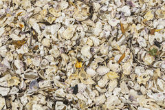 Broken Sea Shells, mussels, oyster, white, yellow, shellfish, pattern Royalty Free Stock Images