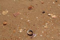 Broken sea shells on sandy beach Stock Photos