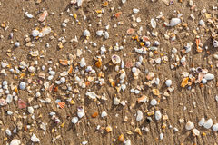 Broken sea shells on tropical beach sand. Royalty Free Stock Image