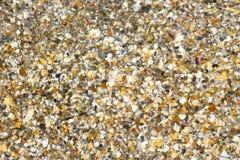 Broken Seashell under water as background Stock Photos