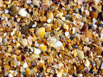 Broken seashells. Close up. Background of variegated broken seashells Royalty Free Stock Image