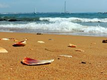 Broken seashells on the algarve beach royalty free stock photo