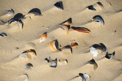 Broken Seashells Stock Photos