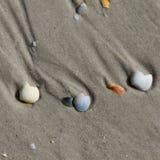 Broken seashells on wet sand beach at summer day Stock Photos