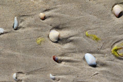 Broken seashells on wet sand with traces of sea waves Royalty Free Stock Images