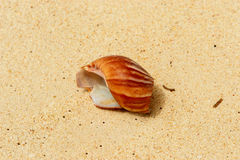 Broken shell in the sand Royalty Free Stock Photos