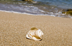 Broken shells Royalty Free Stock Images