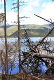 broken skogtree royaltyfria foton