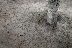 Broken soil with tree background texture. Stock Photography