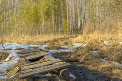 Broken spring forest path through the swamp on a sunny day. Ural Siberia Royalty Free Stock Photo