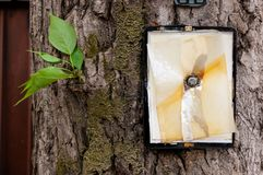 Broken tablet without screen nailed large nail to tree with few green leaves royalty free stock images