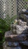 Broken toe frog Stock Images