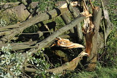 Broken Tree. After a heavy storm Royalty Free Stock Image