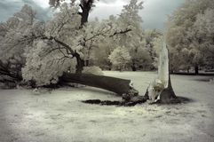 Broken Tree Stock Image