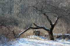 broken tree Royaltyfri Bild