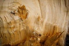 broken tree arkivfoton