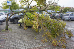 Free Broken Tree After The Hailstorm Stock Photography - 44706072
