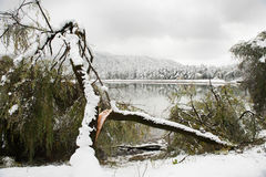 Broken tree on the background of the lake and snow-covered trees Royalty Free Stock Images