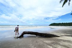 Broken tree by the beach. Broken tree by the white sand beach Stock Images