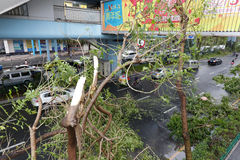 Broken tree. At beijing time 3:05 am on september 15, 2016, no. 14 typhoon  meranti landed in xiamen city. landing intensity level (48 m / s, 15 degree ) was Royalty Free Stock Images