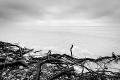 Broken tree branches on the beach after storm. Sea black and white. Broken tree branches on the beach after storm. Sea on a cloudy cold day. Black and white, far Royalty Free Stock Photo