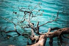 Broken tree. In the lake Stock Photo
