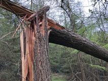 Broken tree. After storm Royalty Free Stock Image