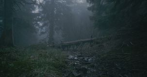 Broken tree with curvy branches in a dark wood in the Carpathians in slo-mo