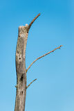 Broken tree Stock Photography