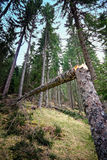 Broken tree in forest vegetation Stock Photos