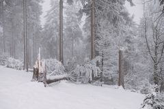Broken tree in the forest, winter and snow stock photos