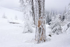 Broken tree frozen with snow in foggy mountains Royalty Free Stock Images