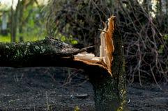 Broken tree. A broken tree in the garden Royalty Free Stock Photos
