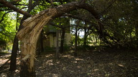 Broken Tree On The Ground stock video footage