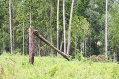 A broken tree in half. As a result of the hurricane Royalty Free Stock Photography