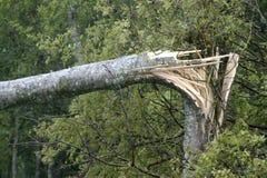 Broken tree hurricane Royalty Free Stock Images