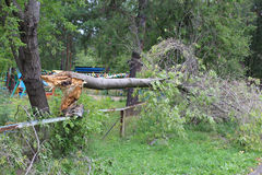 Broken tree after Hurricane Stock Photo