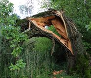 Broken tree. Stock Photography