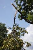 Broken tree limb. After a storm Royalty Free Stock Photos