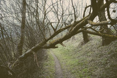 Broken tree near a path in the forest Stock Photos