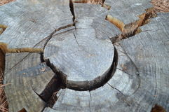 Broken tree ring pieces. Broken dried tree ring pieces fit together in puzzle shape Stock Images