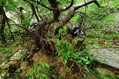 Broken tree ruined by typhoon Stock Photos