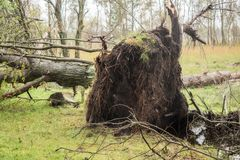 Broken tree after a storm. Broken tree after a big storm Stock Photography