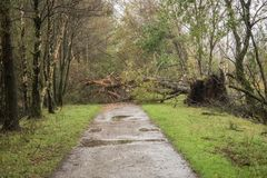 Broken tree after a storm. Broken tree after a big storm Stock Photo