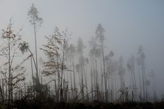 Broken tree during storm gales. A mist of morning mist over a br. Oken forest after a huge wind. Broken forest royalty free stock photos