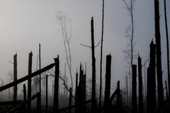 Broken tree during storm gales. A mist of morning mist over a br. Oken forest after a huge wind. Broken forest stock images
